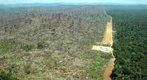 El Amazonas dejará de reducir dióxido de carbono de la atmósfera en 2035